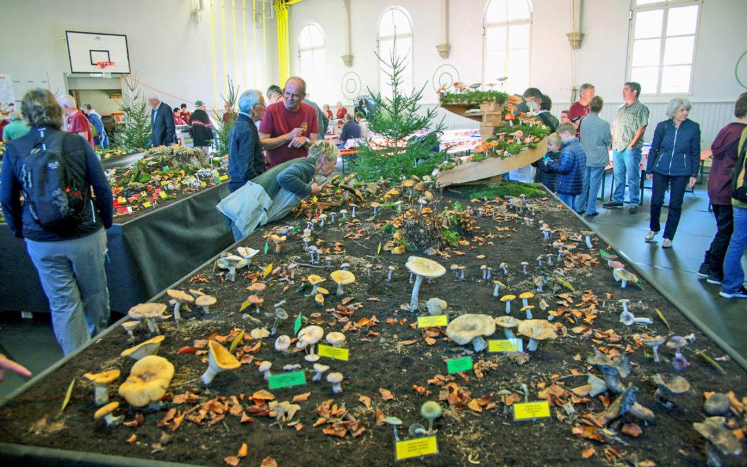 Pilz-Expo: Augenweide für Laien und Kenner